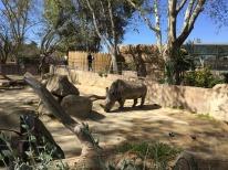 segon-zoo-10